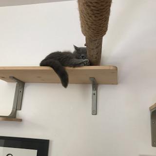 Monsieur le chat se repose en hauteur