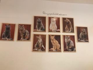 Les chats du café font la pose