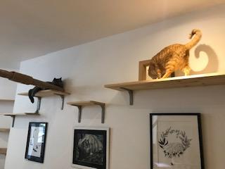 Entrée réservée aux chats qui leur permet de rejoindre leurs pièces