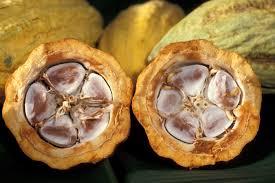 Les fèves dans leur mucilage